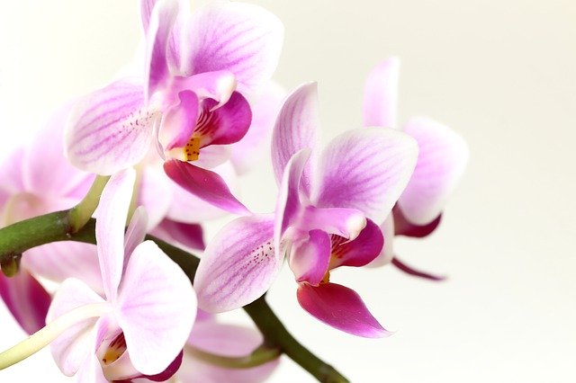 orchid-4832940_640